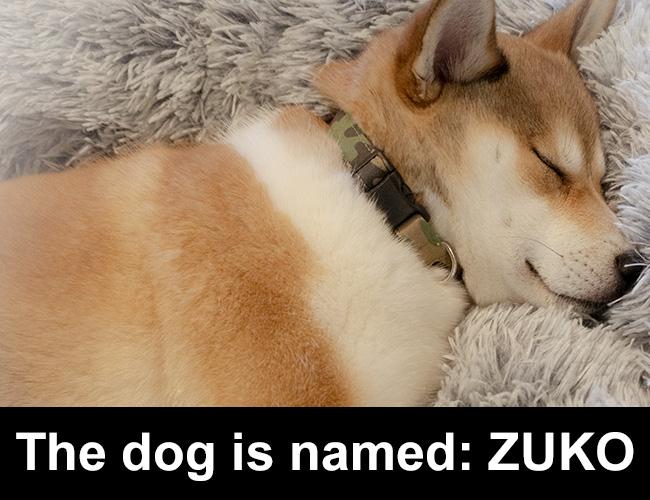 The dog is named: ZUKO